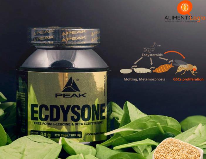 Suplemento de Ecdisteroides: ¿Aumento de masa muscular y fuerza?