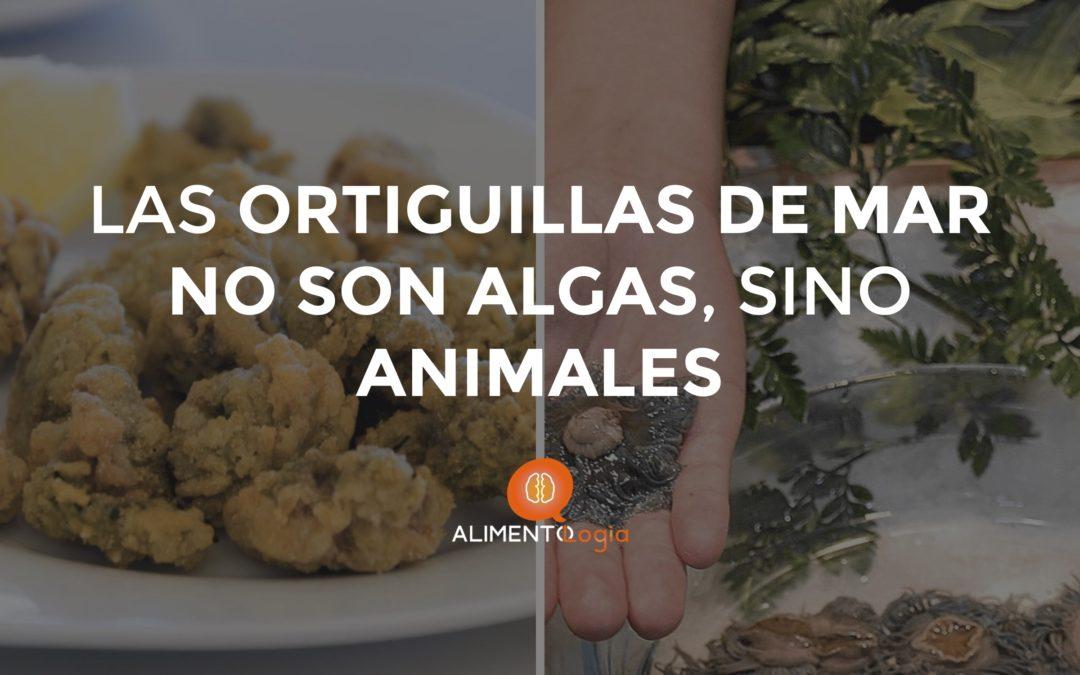 Las Ortiguillas, el manjar andaluz, son animales y no algas